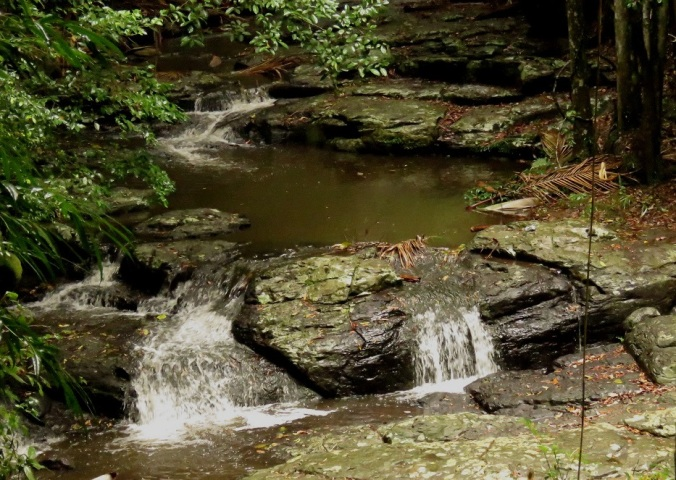 Cedar Creek tumbling over rocks