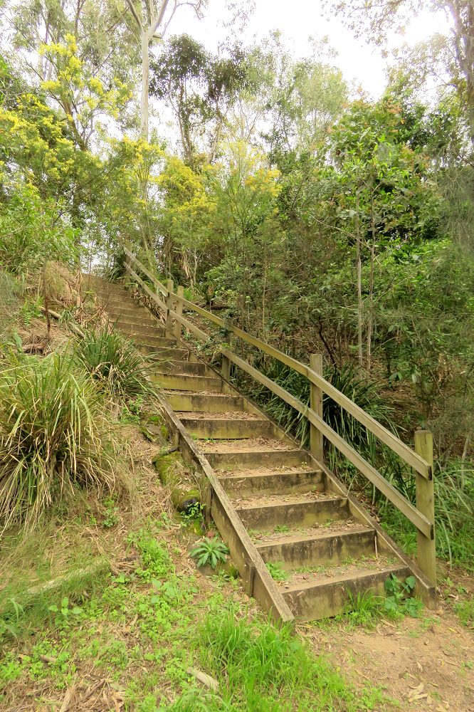 steps and wattle