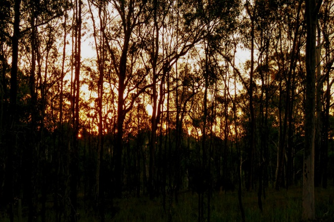 Sunset at Wivenhoe through trees