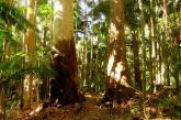 rainforest trees