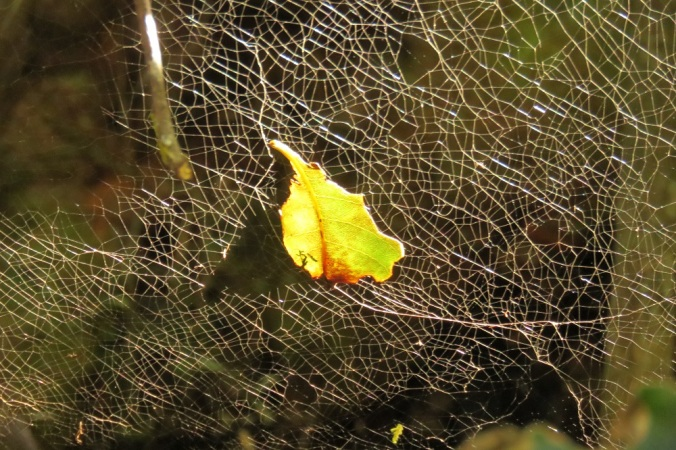 spider web and leaf