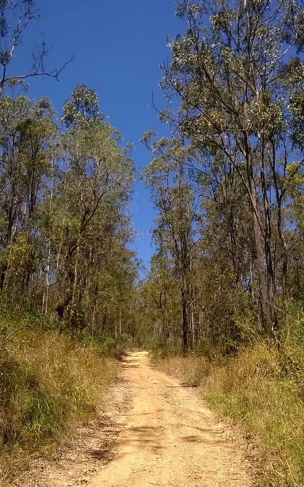 Yaddamun Trail through bushland