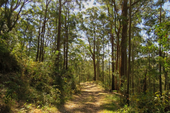 Goomburra woodland