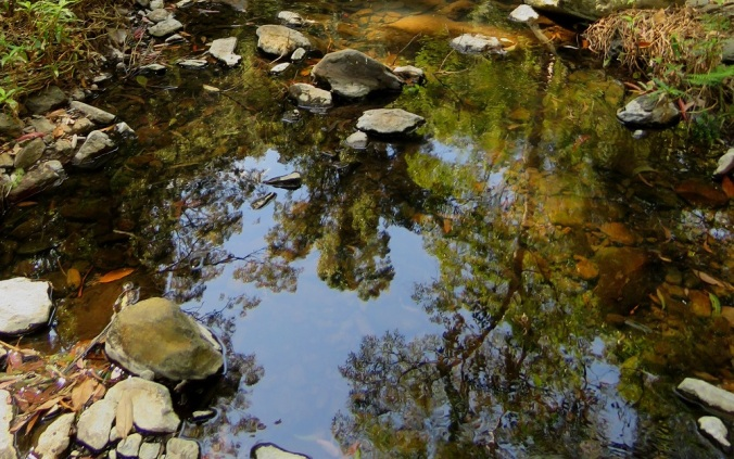 leaves water reflections Goomburra