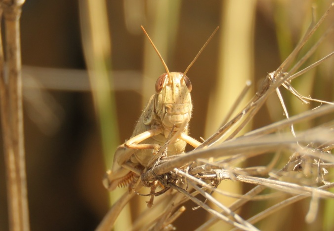 Grasshopper Sundown National Park
