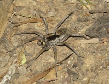 Spider Sundown National Park
