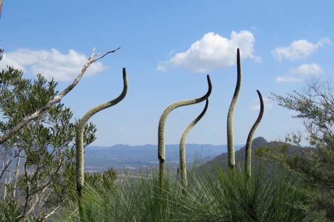 Grass tree stalks bending