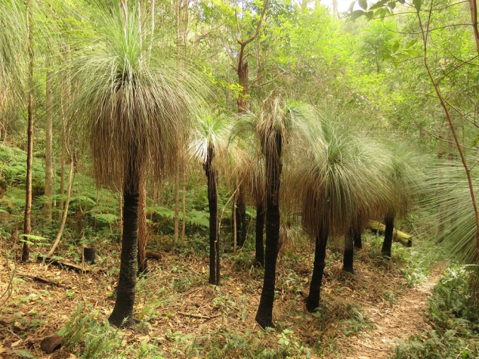 Grass trees along track
