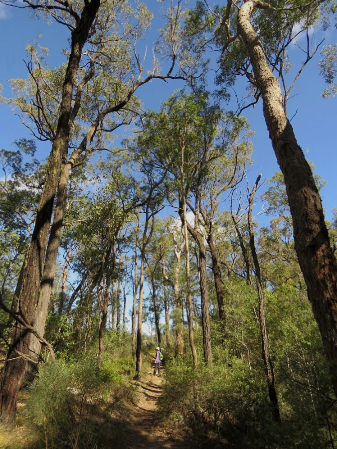 Crows Nest National Park 3