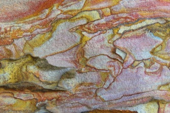 Colours and Patterns of the Pilliga
