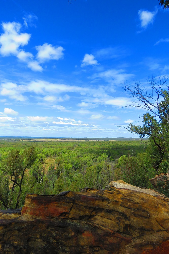 The Pilliga Forest