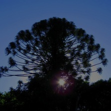 Bunya Mountains at dusk