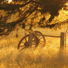Late afternoon light and wagon wheels